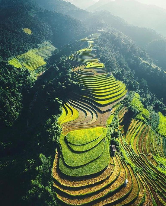 You can see terraced rice fields during your trek to Muong Hoa valley